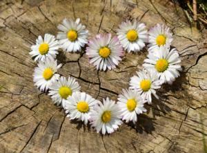 Καλοκαιρινά λουλούδια Στεφάνι