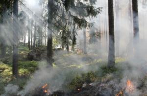 Δέντρα που καίγονται σε Δασικές πυρκαγιές. Χρειάζεται να ληφθούν ειδικά μέτρα για προστασία που αφορούν την υγεία